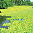 The status of weed biological control in Vanuatu